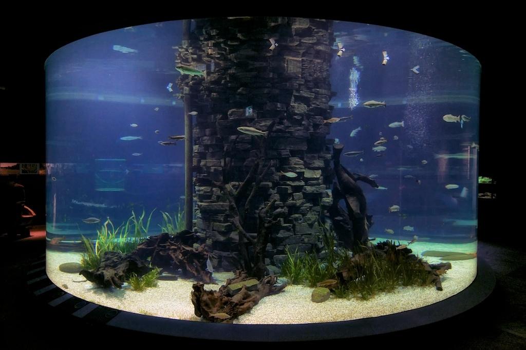 Museum für Naturkunde Dortmund - Aquarium 90.000l